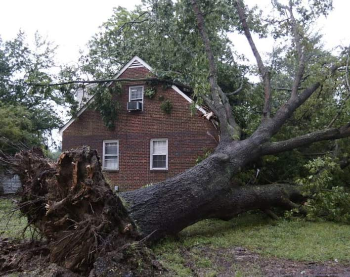 Home owner in need of Emergency Tree Removal Services in Atlanta