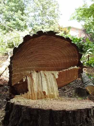 Image of Stump Grinding in Gwinnett County