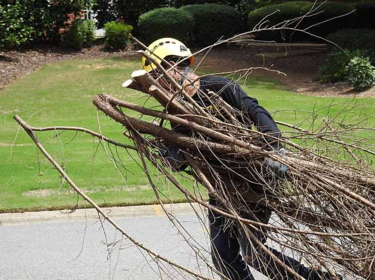 770-BAM-Tree employ doing tree trimming in the Atlanta Area