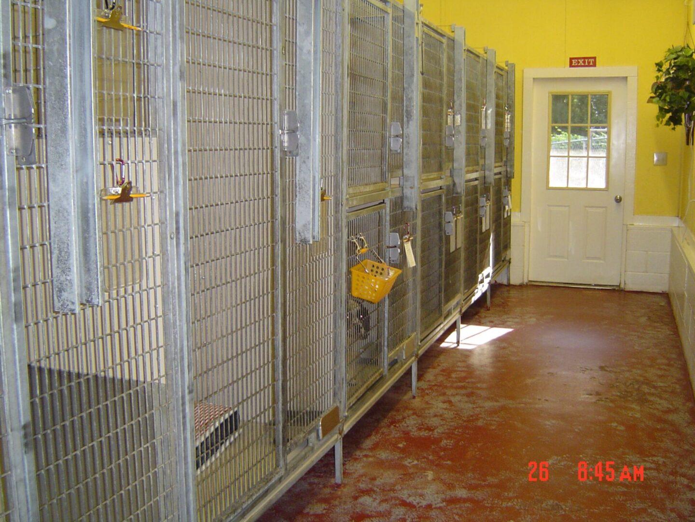 Dog kennel area