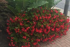 flower-programs