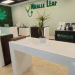 Miracle Leaf Medical Marijuana Doctor Card MMU Registry and CBD Dispensary