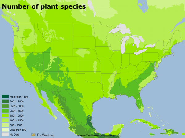 Number of plant species