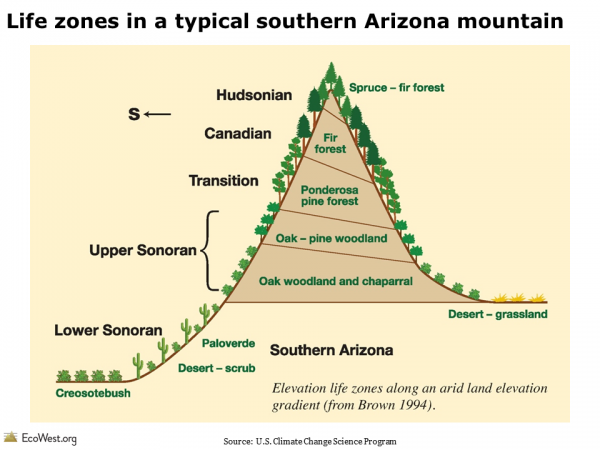 Life zones in a typical southern Arizona mountain