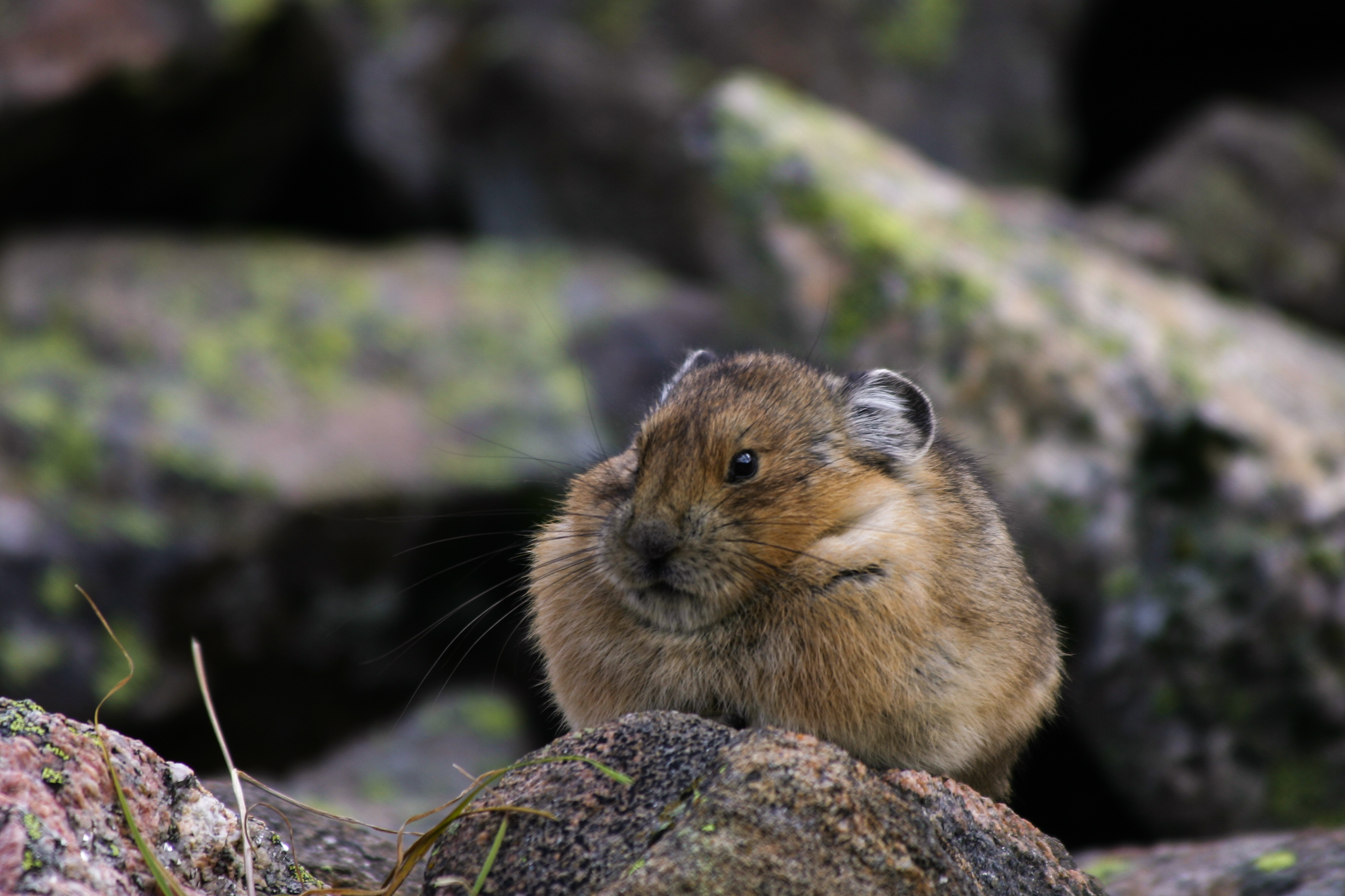 Video: mountain species, climate change, and the escalator effect