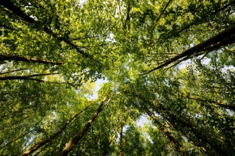PROMOTING FOREST HEALTH