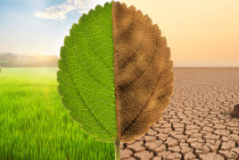 Climate Action Solutions