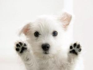 Dockside_white-dog-happy-puppy-1600x1200