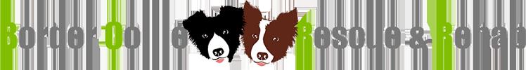 Border Collie Rescue & Rehab