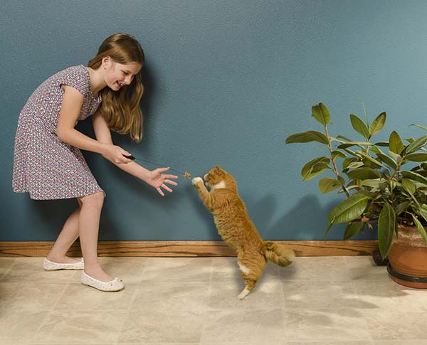 Girl and cat playing with a cat toy.