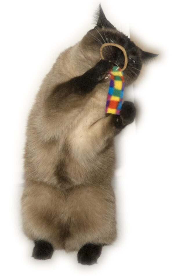 Cat Playing With Ring Tail Toy