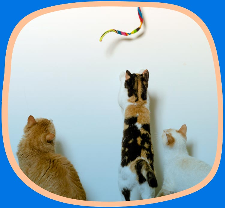 Three cats playing with a cat charmer interactive cat toy.