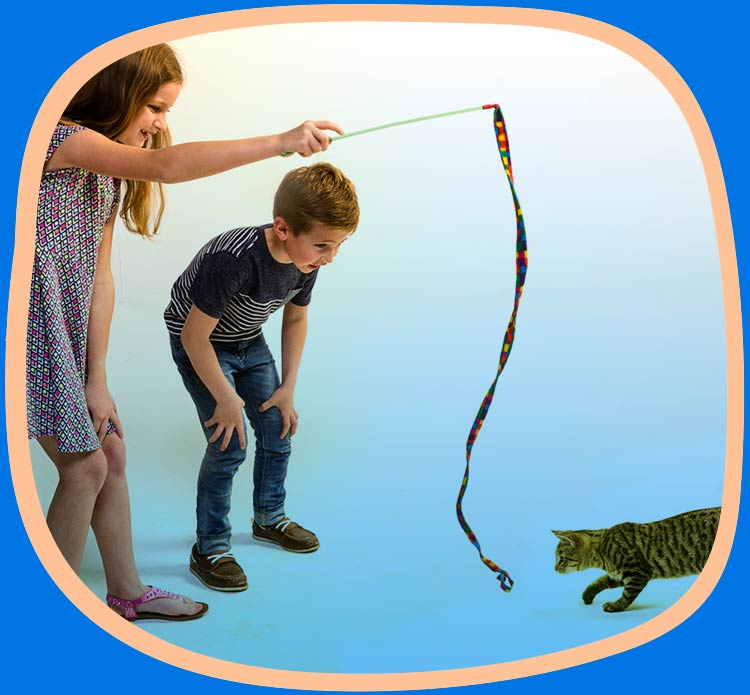 Cat and children playing with a cat charmer cat toy.