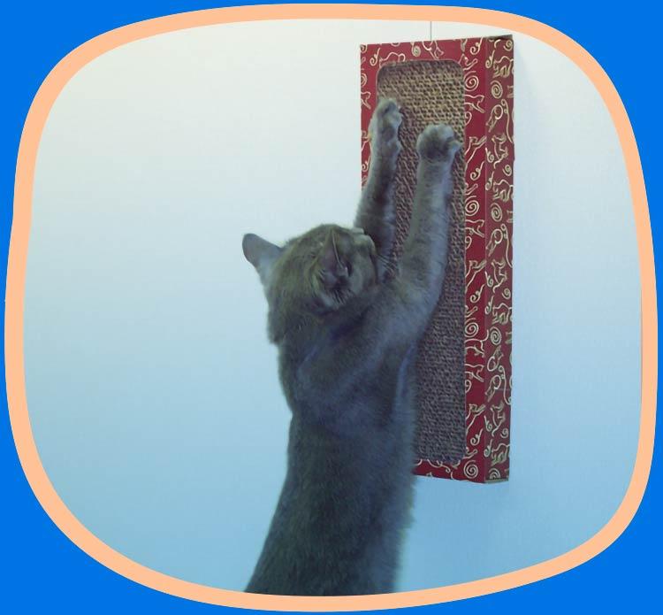 Cat using Cat Dancer Wall Scratcher.