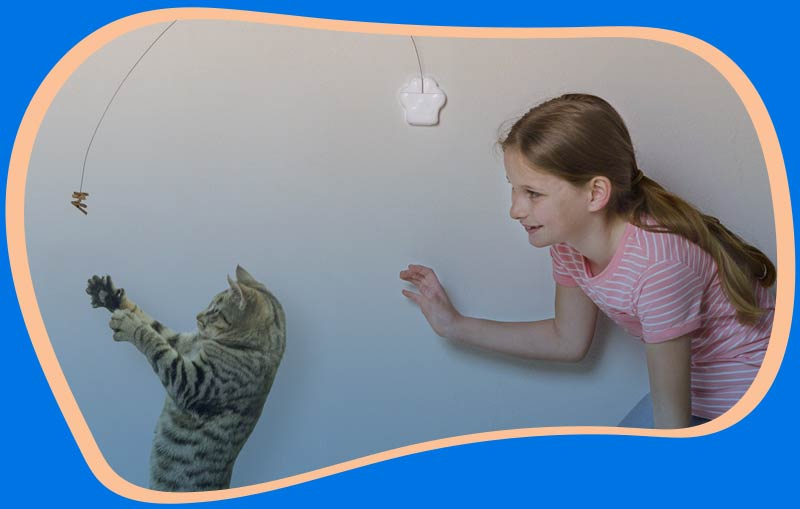Cat and child playing with a cat toy.