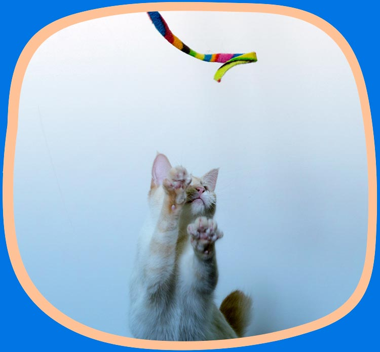 Cat playing with the Cat Charmer interactive toy.