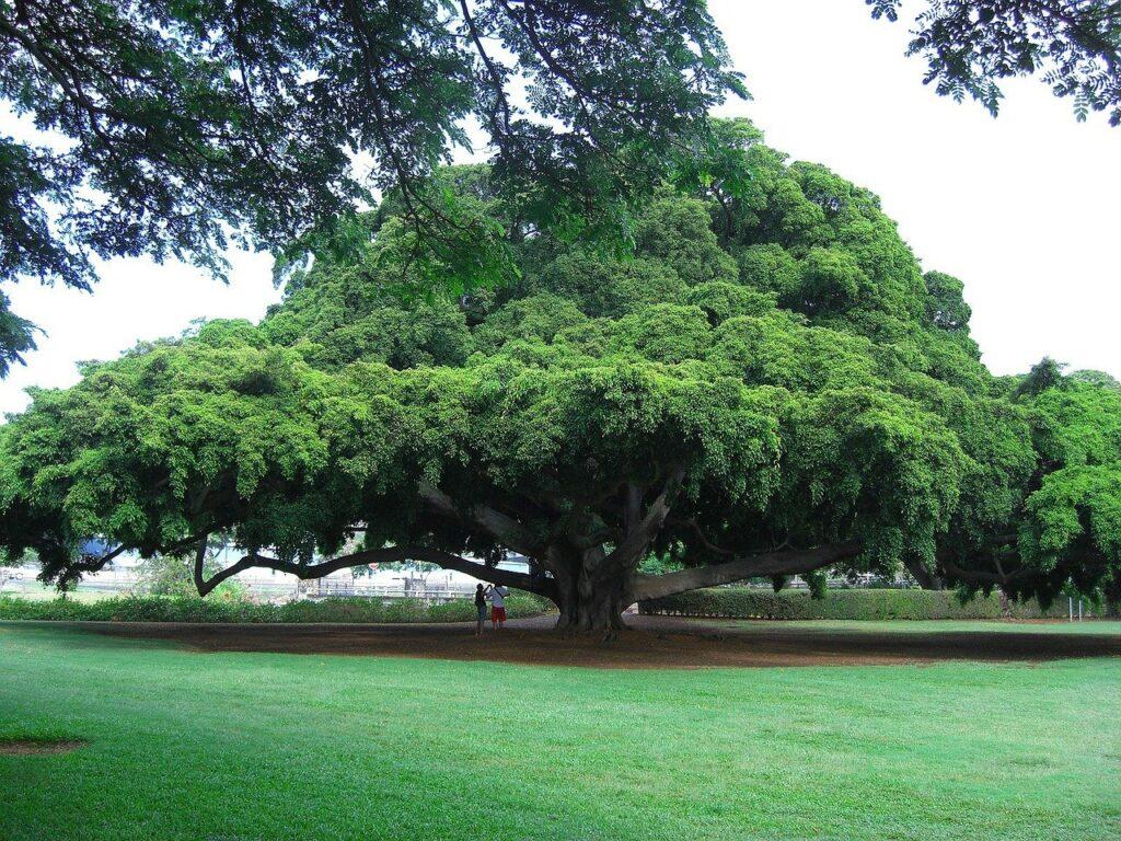 tree Hitachi Forrest