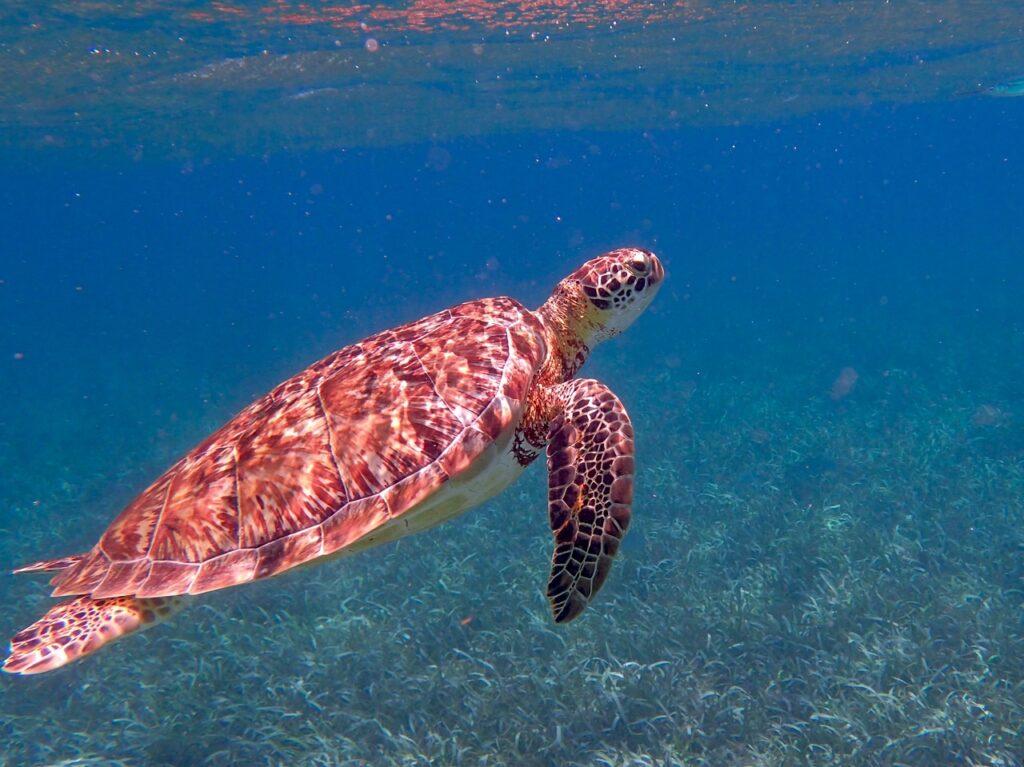 turtle 1958058 1280