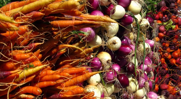 Carrots, radishes and turnips at a farmer's market