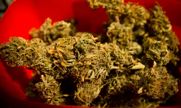 Photo of marijuana buds