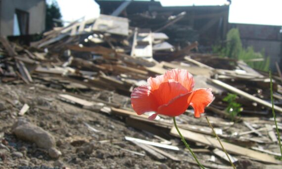 A poppy growing at a disaster site demonstrates how you can find beauty and hope in the dimmest of circumstances