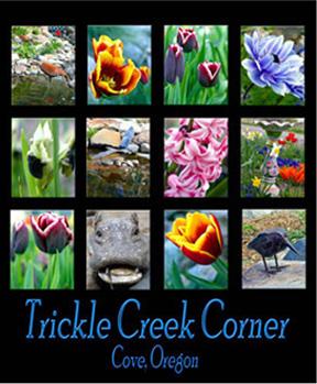 tricklecreekcorner