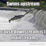 Swim, Swim, Swimming!