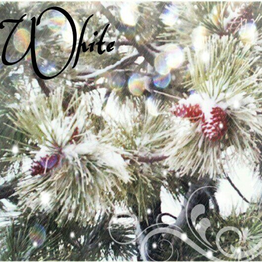 December 4 - DHD Photo A Day