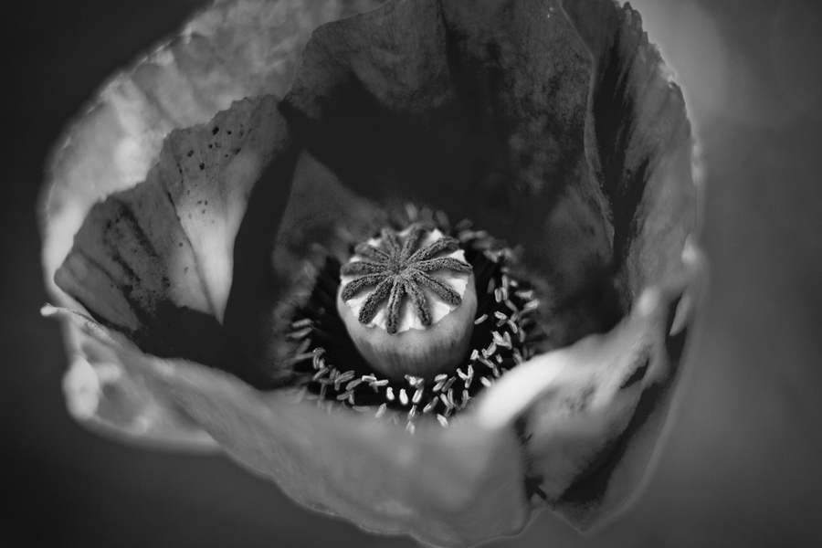 TrickleCreek_Flora-54