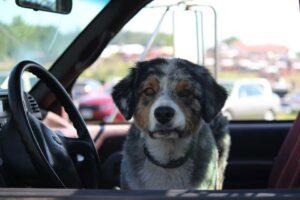 Ted the Farm Dog