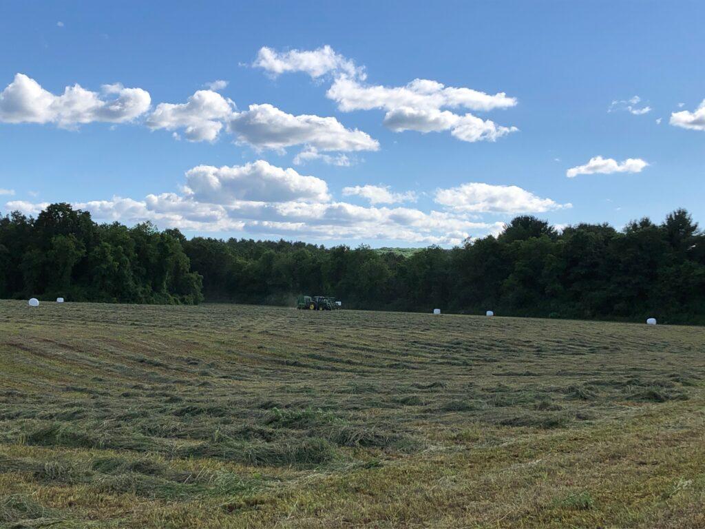 mowed hay, hay for sale