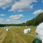 haylage bales for sale, silage bales for sale, wrapped round bales