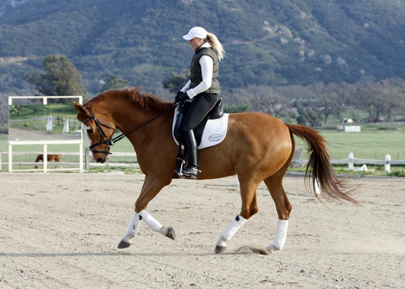 Verena riding Phox, 07/08/10