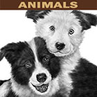 digital illustration by John Fraser of two Border Collie puppies named Winnie and Viola, border collie, puppies, dog portrait, cute, babies, best friends