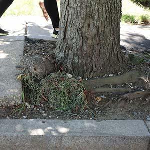 Tree Growth Regulator