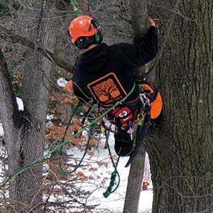 winter tree services