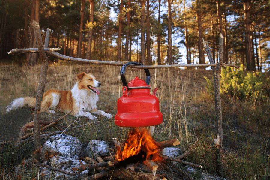 Dog near the camping fire - Tahoe Best Friends