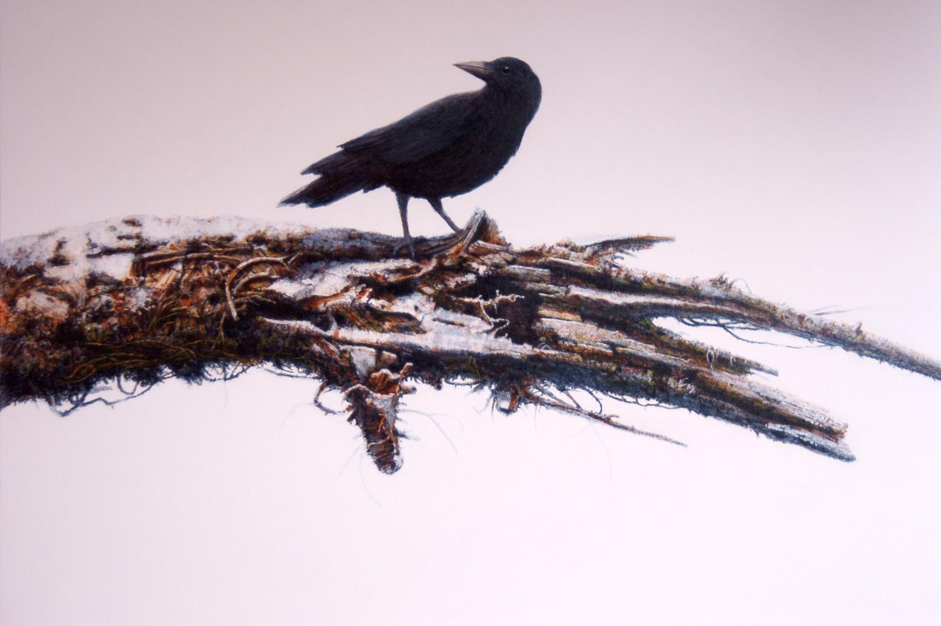 Crow – Jack Coneby