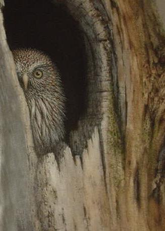 Owl2 - Jack Coneby