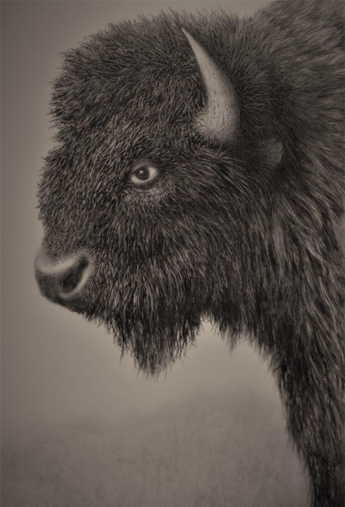 Buffalo Bill - Jack Coneby