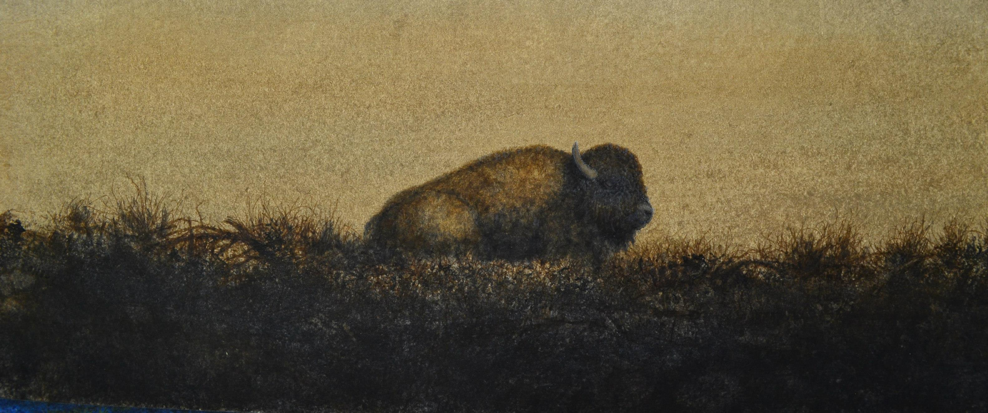 Buffalo_Resting
