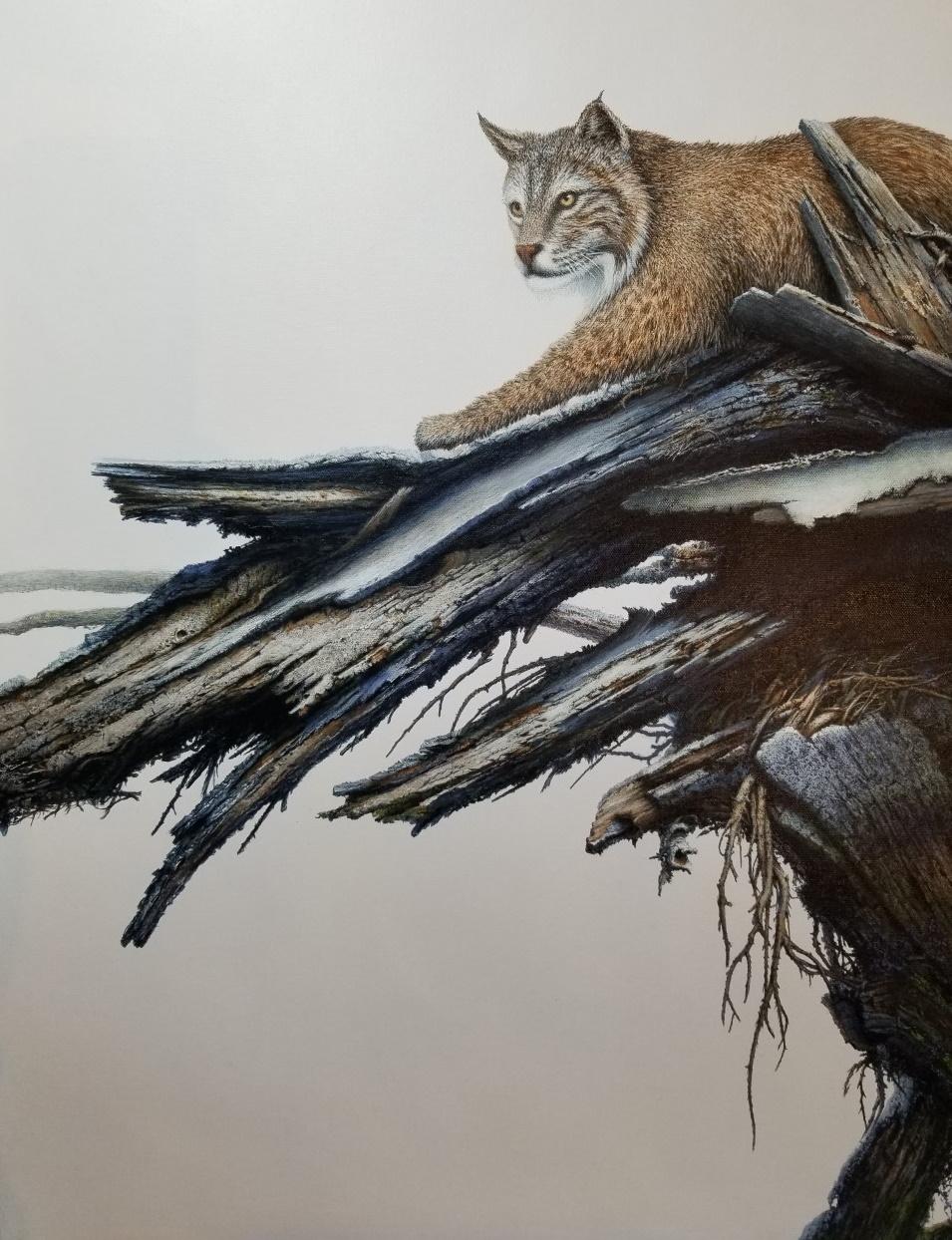 Riverside Bobcat Acrylic 30 x 24