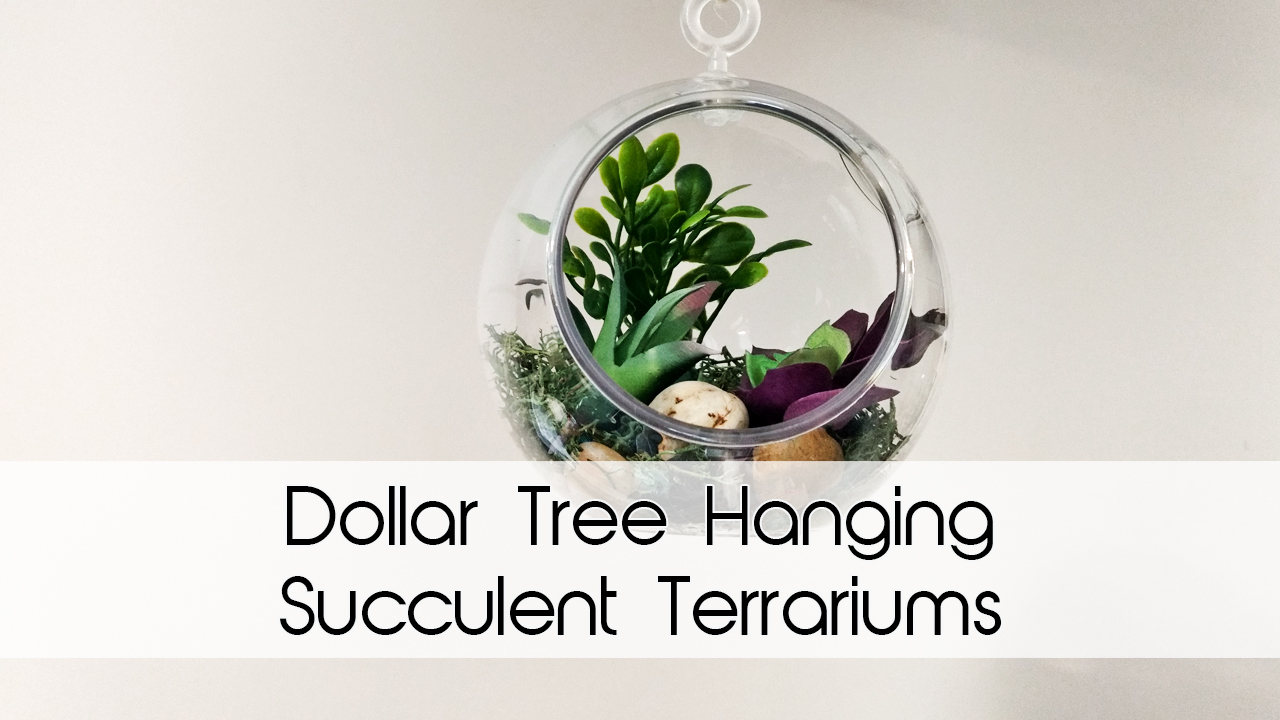 Dollar Tree Hanging Succulent Terrariums DIY