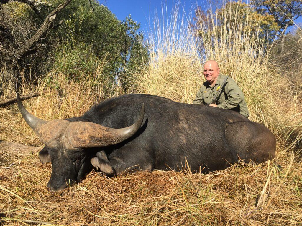 """44"""" Cape Buffalo"""