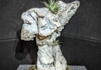 Agatized Coral sculpture Withlacoochee River