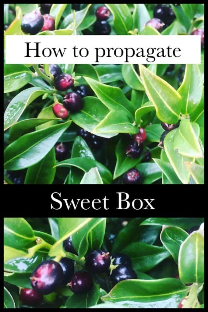 Propagate sweet box