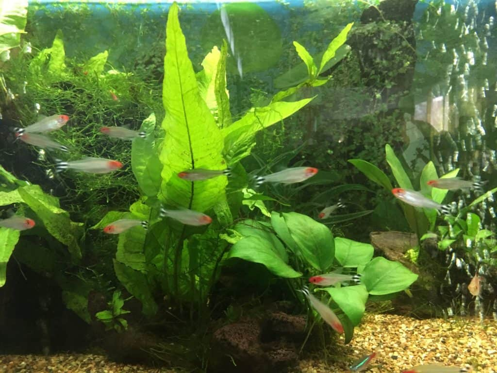 How to make an aquarium with live plants
