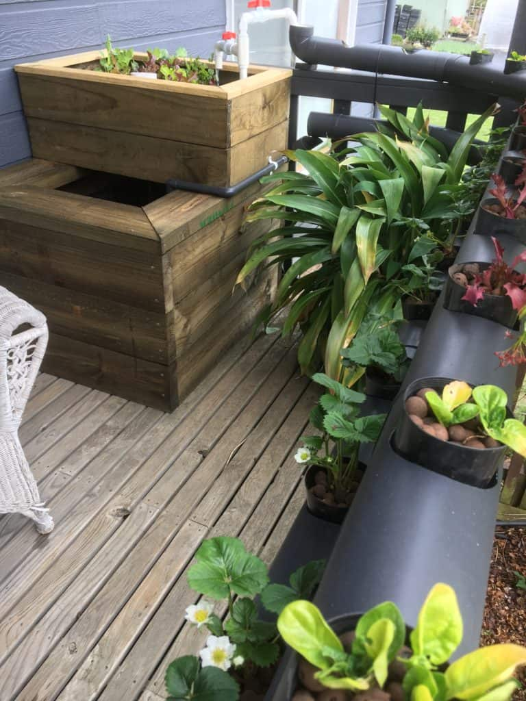 Diy Patio aquaponics system