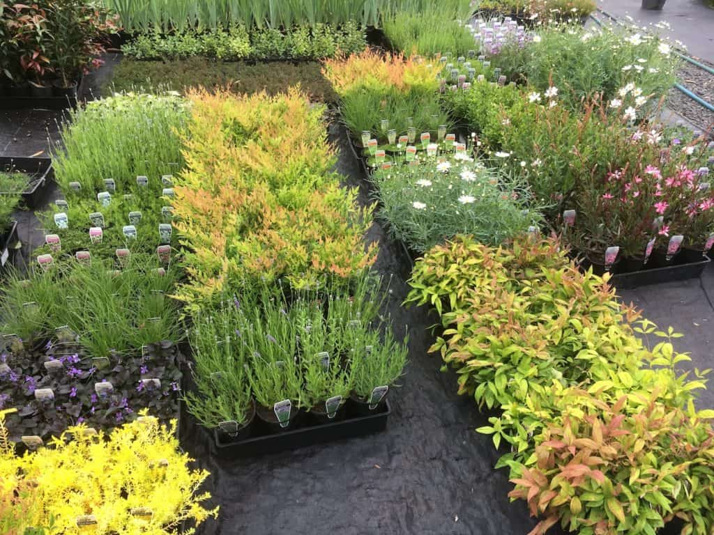 Plants in our nursery-Everyday Wits