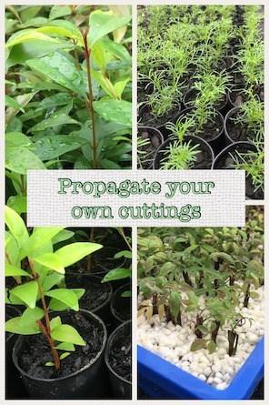 Everydaywits propagation starter pack